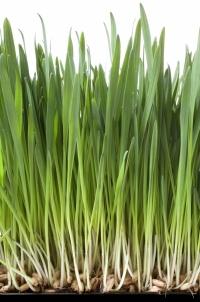 grass-1-1.jpg